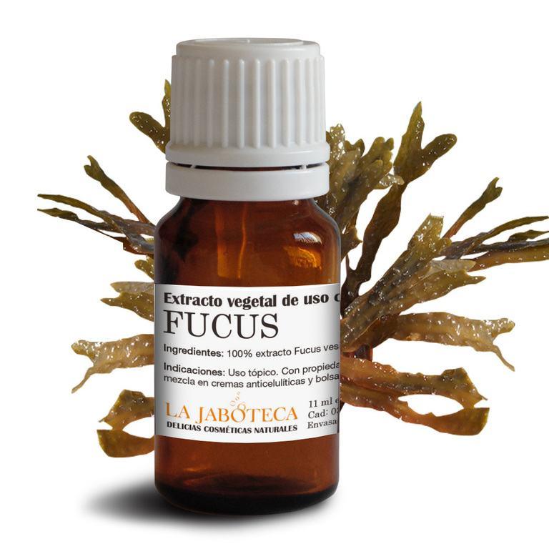 Alga-Fucus-Usos-Propiedades-Beneficios