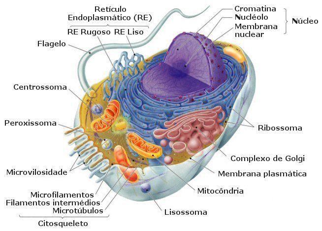 diferencias-entre-virus-bacterias