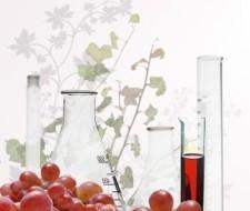 Uvas polifenoles contra bacterias