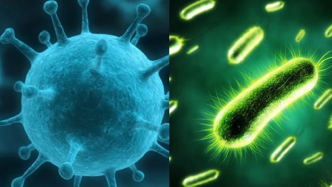 virus-bacteria-no-es-lo-mismo-diferencias