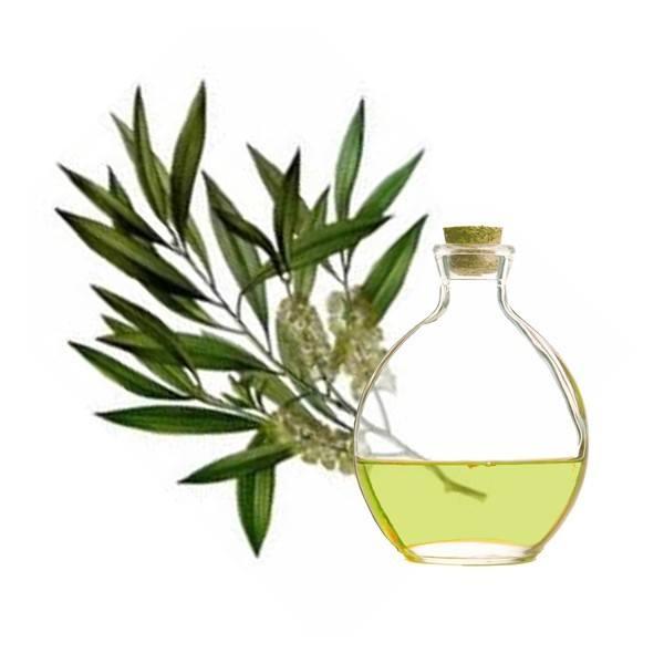 aceite-arbol-del-te-propiedades-y-beneficios-planta