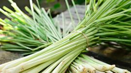 Hierba luisa o Verbena | Propiedades y Beneficios