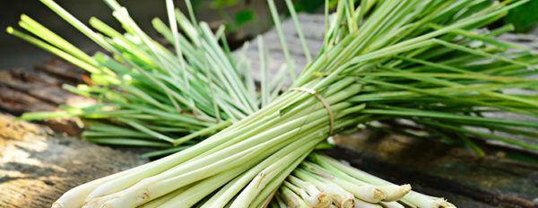 tranquilizantes-naturales-hierba-luisa