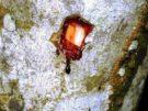 Sangre drago | propiedades