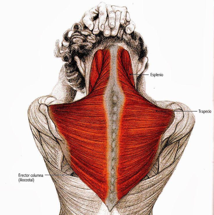Cómo-estirar-el-cuello-Ejercicios-para-estirar-el-cuello