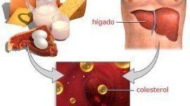 Triglicéridos – Qué son, causas y síntomas de los triglicéridos altos