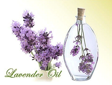 page_Lavender_thumb16