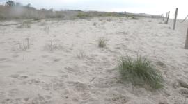 Carrefour, a un click de reconstruir la playa de Tamarit