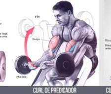 Ejercicios de bíceps | Cómo hacerlos de forma correcta