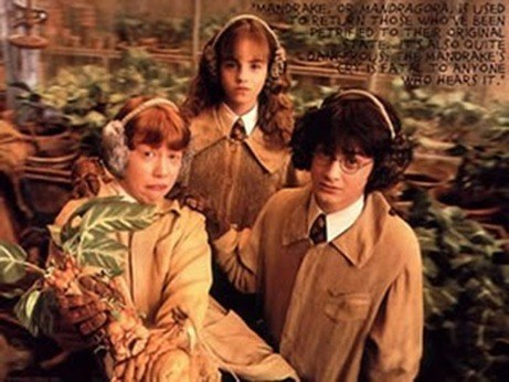 harry-potter-mandrake