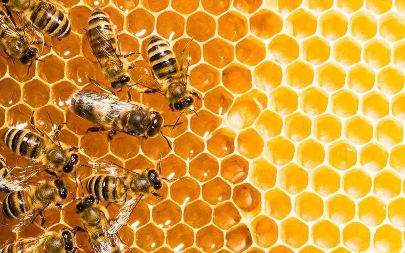 Miel-de-abeja-Precauciones-consejos