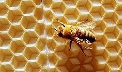 Riesgos de la miel