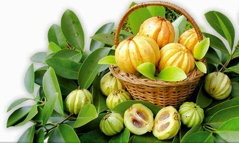 Where to Buy Garcinia Cambogia Hca in San Antonio Texas | The I Feel