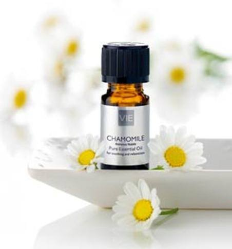 chamomile_essential_oil_287x385