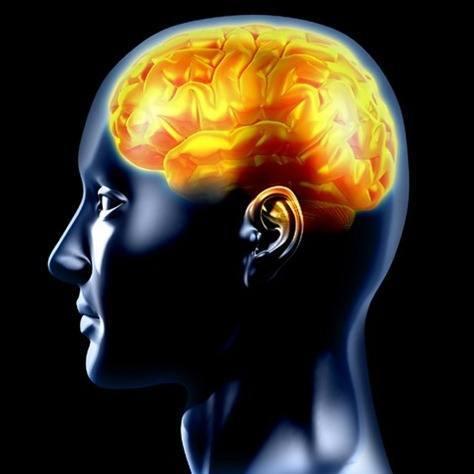 cerebro curiosidades