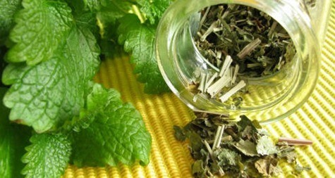 herbs_melissa_dried_fresh_green_tea_infusion