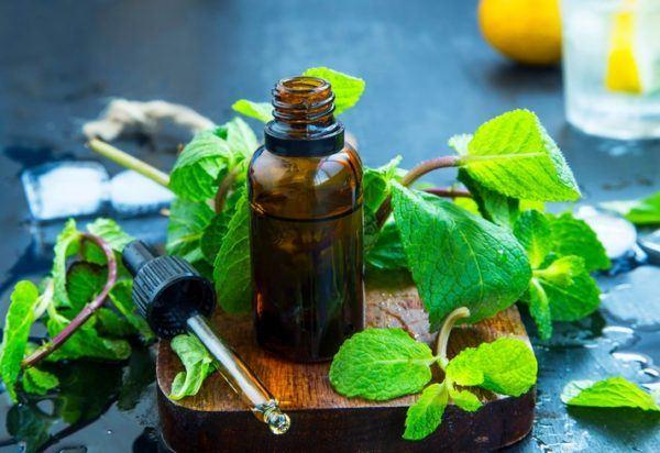 Usos del aceite de menta
