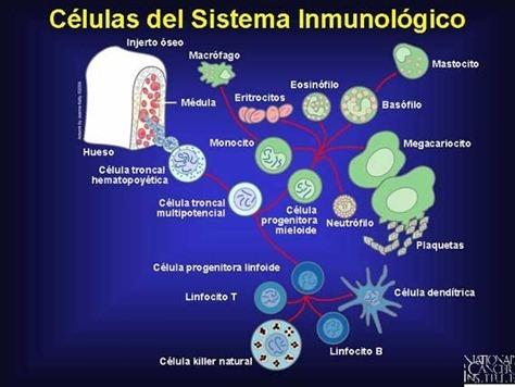 Estimular sistema inmunologico