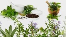 Estimular sistema inmunologico  hierbas
