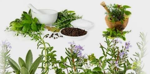 stimuler le syst me immunitaire base de plantes. Black Bedroom Furniture Sets. Home Design Ideas