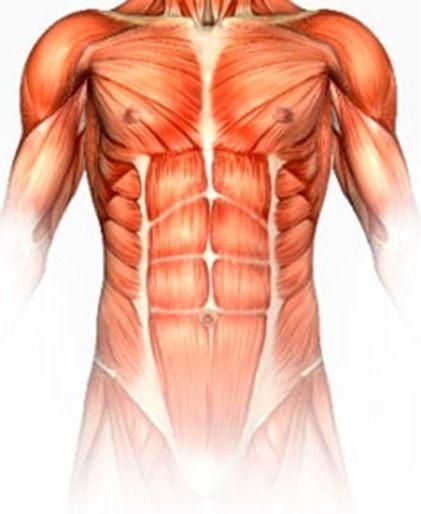Ornitina y anabolismo muscular