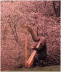 Musica de arpa- pulsa sobre imagen