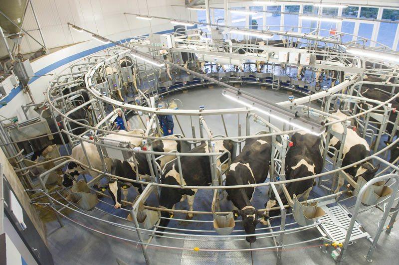 Historia-de-los-lácteos-Qué-son-tipos-y-derivados-de-los-lácteos