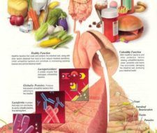 Enzimas digestivas para la digestión pesada