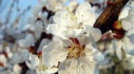 Flores de Bach: Remedios naturales para desequilibrios emocionales