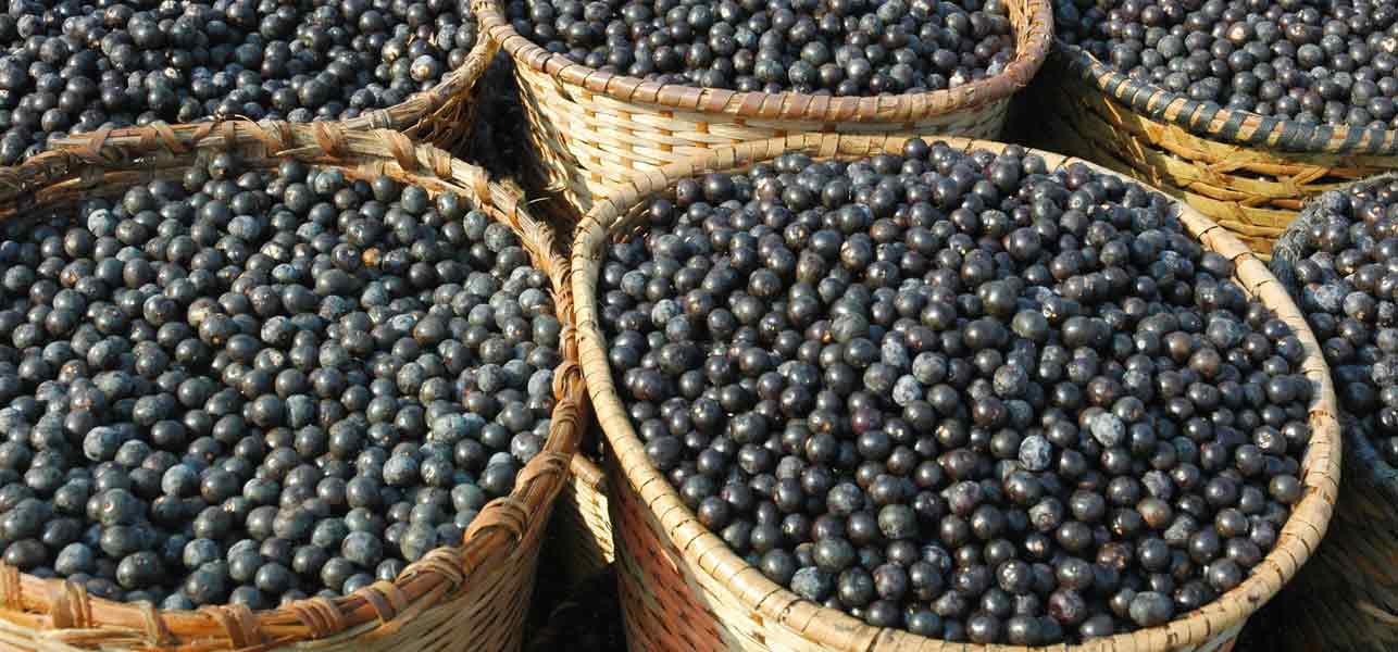 acai-berry-propiedades-beneficios