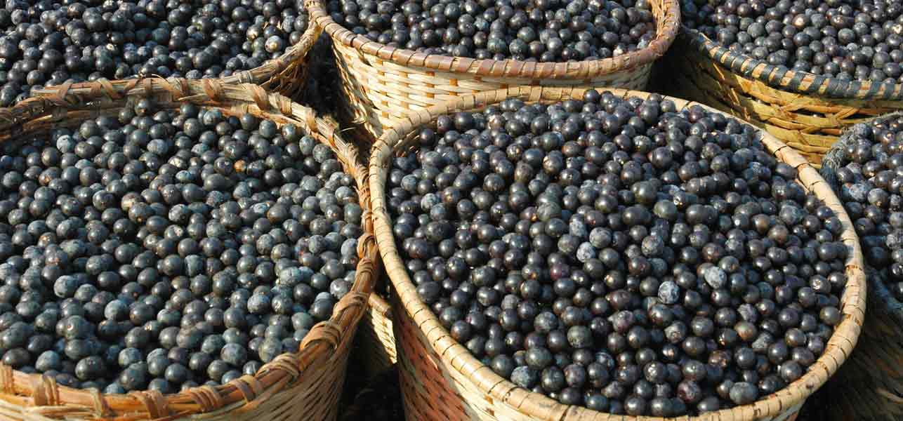 Acai Berry - Propiedades, Beneficios - ViviendoSanos.com