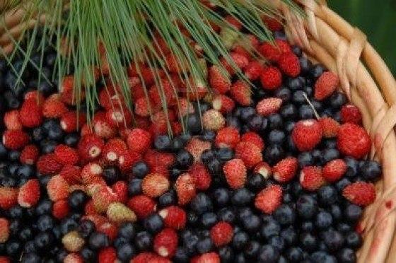 acai-berry-dieta