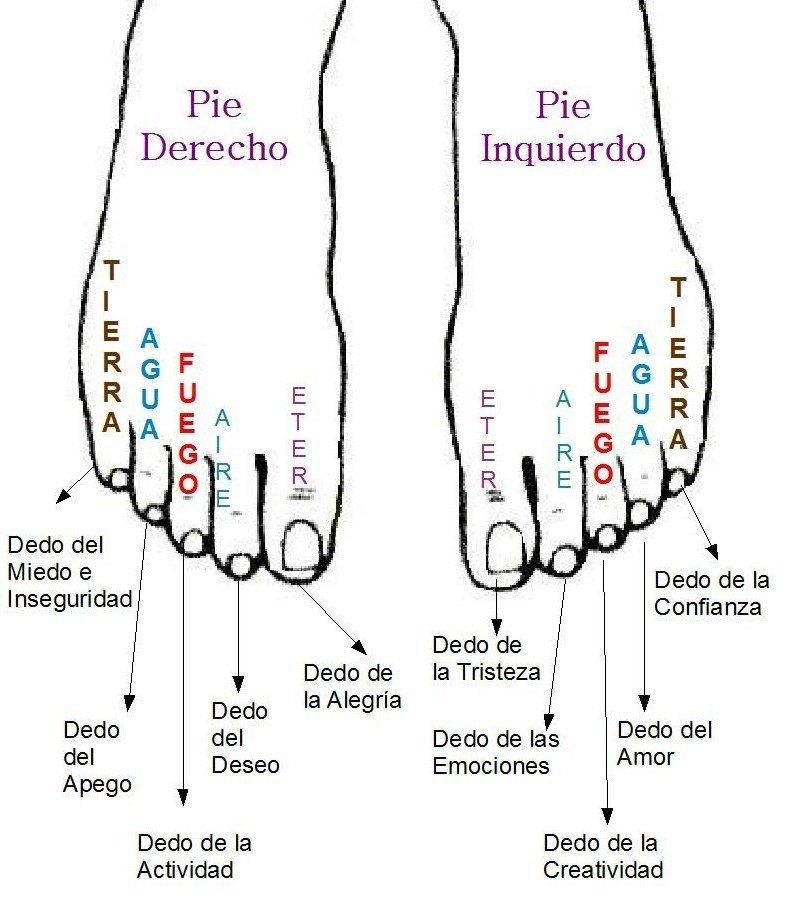 ... pies se refleja todo el organismo, dependiendo de la zona del pie