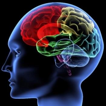 ginkgo-biloba-actividad-cerebral