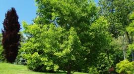 Ginkgo biloba: Propiedades y Beneficios