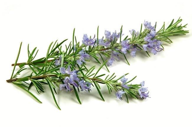 medicina-natural-plantas-antiestres-romero