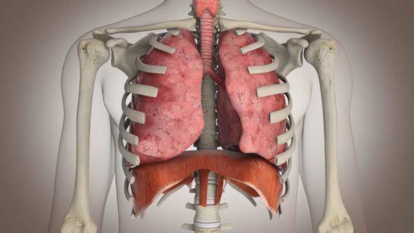 poleo-propiedades-y-beneficios-aparato-respiratorio