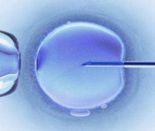 La fecundación 'in vitro' está relacionada con el incremento de riesgo de retraso mental