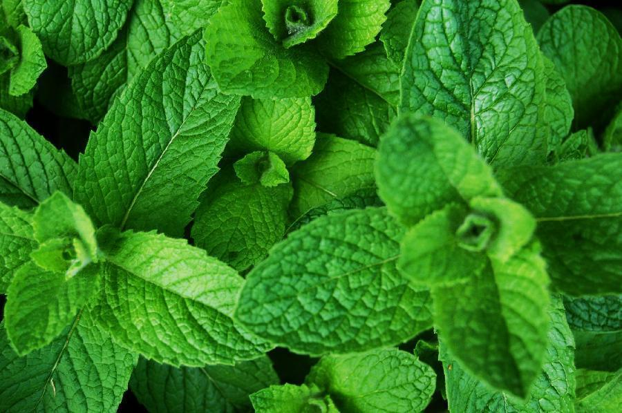 las-mejores-plantas-medicinales-que-puedes-cultivar-en-casa-hierbabuena