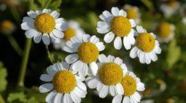 Las mejores plantas medicinales que puedes cultivar en casa