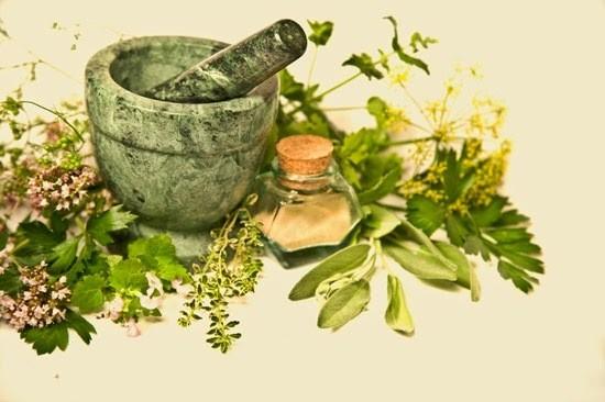 las-mejores-plantas-medicinales-que-puedes-cultivar-en-casa-plantas