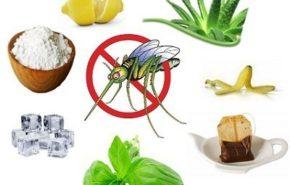 Picaduras del mosquito tigre, remedios caseros