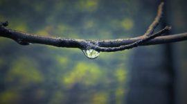 Agua Solán de Cabras – Propiedades, Beneficios, Mitos y Características