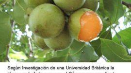 La Huaya es una fruta que cura el cáncer