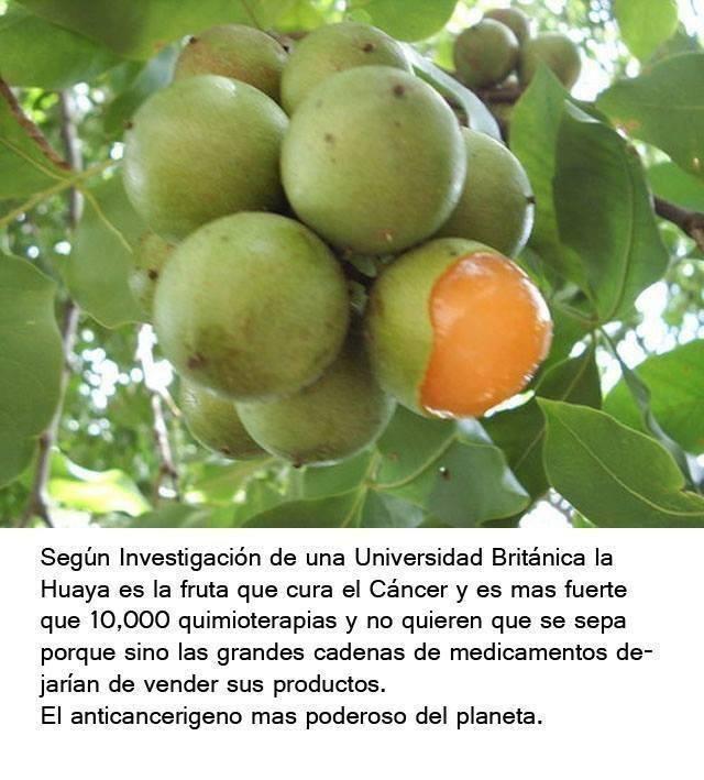 la-huaya-es-una-fruta-que-cura-el-cancer-usos-y-beneficios