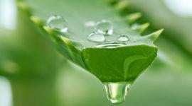 Aloe Vera o Sábila: Beneficios y Propiedades medicinales | Usos y efectos secundarios