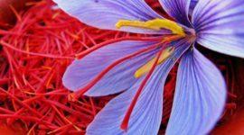 Azafrán – Propiedades y Beneficios para la salud