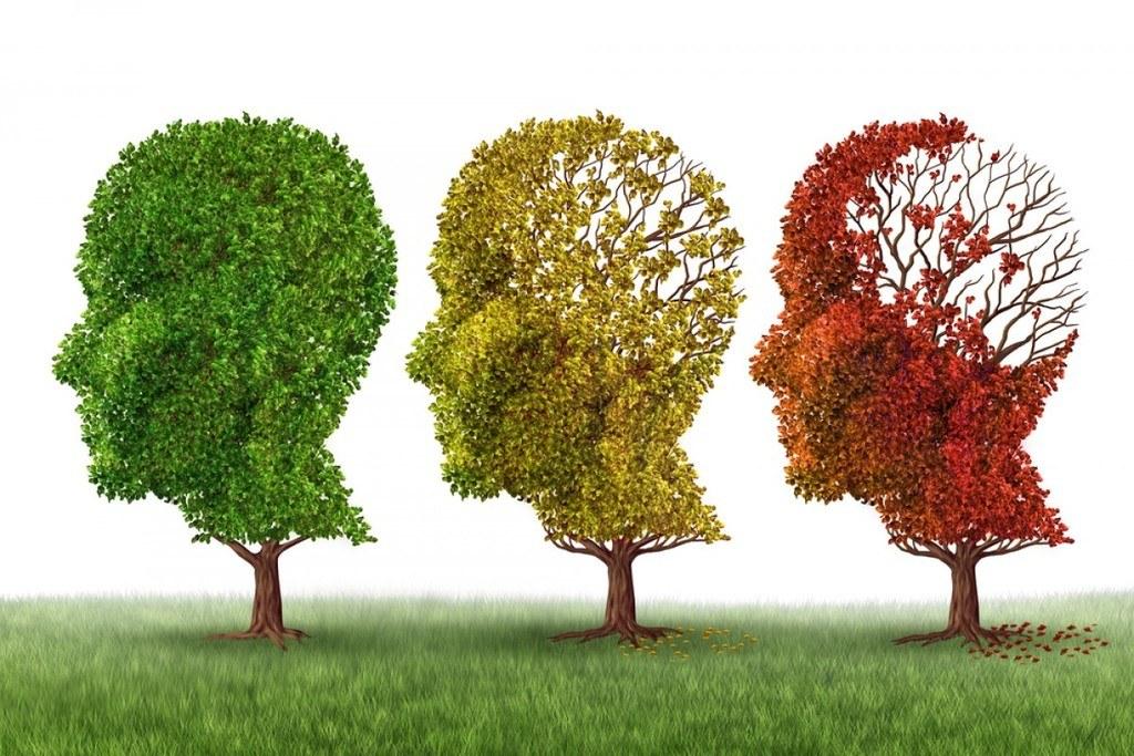 remedios-para-el-alzheimer-arboles