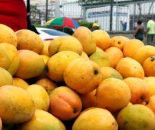 Mango – Propiedades y Beneficios