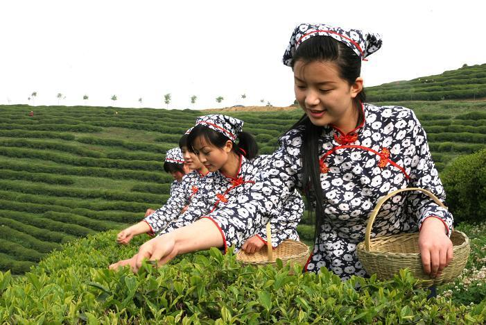 Té-Rojo-chino-Propiedades-Beneficios-y-Usos